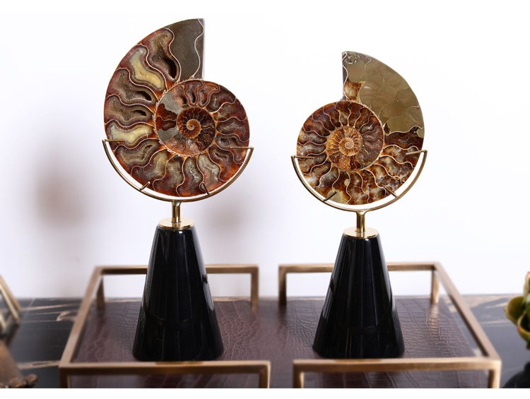 Modern Creative Nautilus Fossil Statue Home Decor Crafts Room Decoration Objects Office Black Wood Paint Figurines Gifts