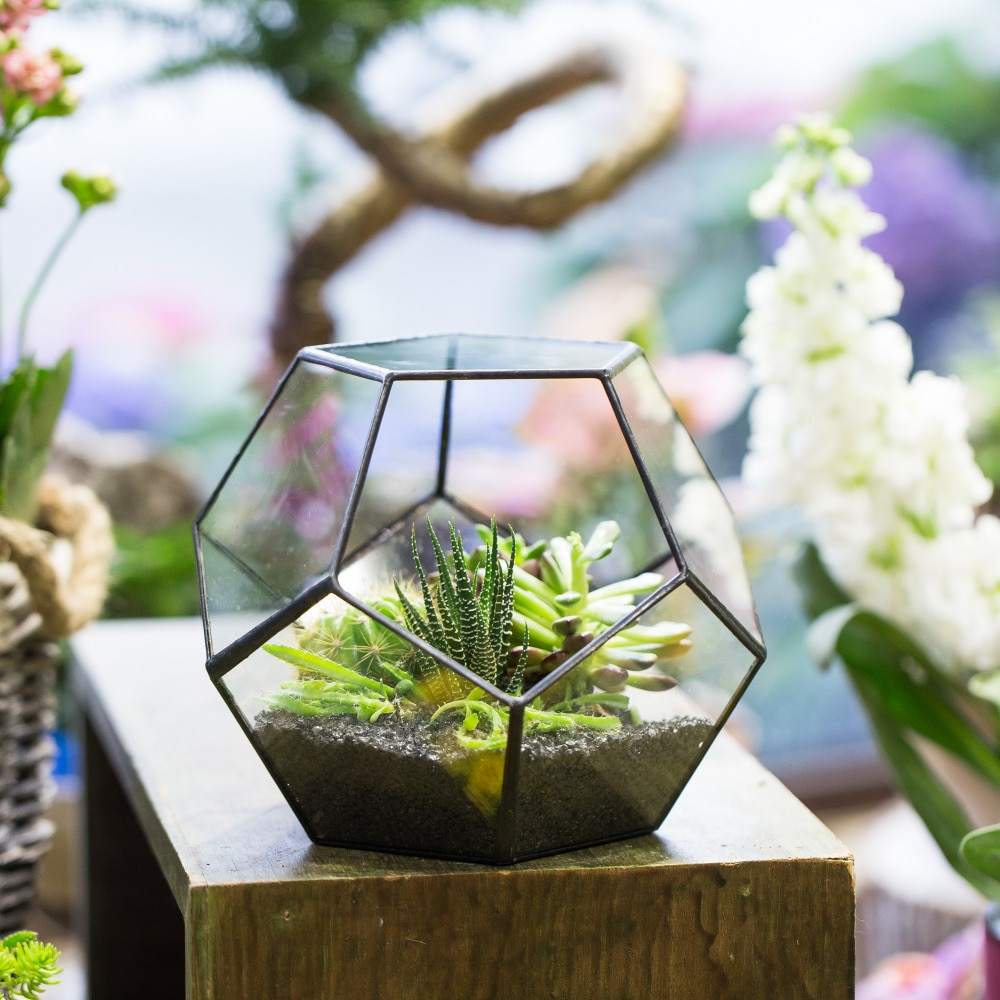 Tabletop Display Succulent Fern Moss Flower Pot Air Plant Planter Box Fairy Garden Polyhedron Glass Geometric Terrarium Bonsai