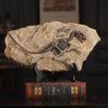 اكسسوارات منزل مستحاثة رسم ديناصور اكسسوارات منزلية
