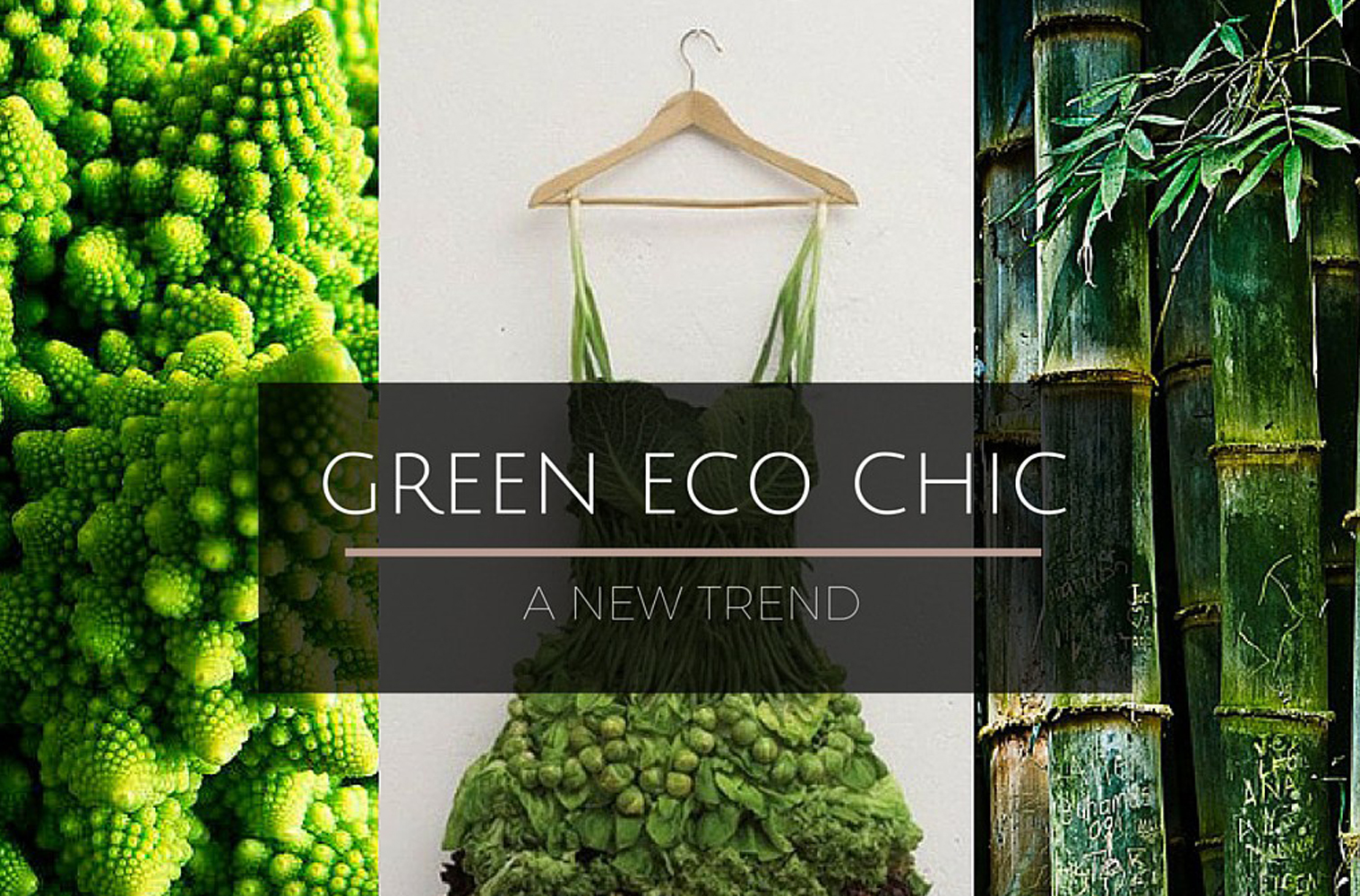 السياسة الخضراء: اتجاه نمط الحياة