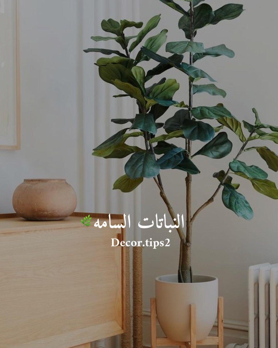 .هل كل نباتات الزينة سامة؟ هل تصل سمية نباتات الزينة للوفاة لاسمح الله؟ ما…
