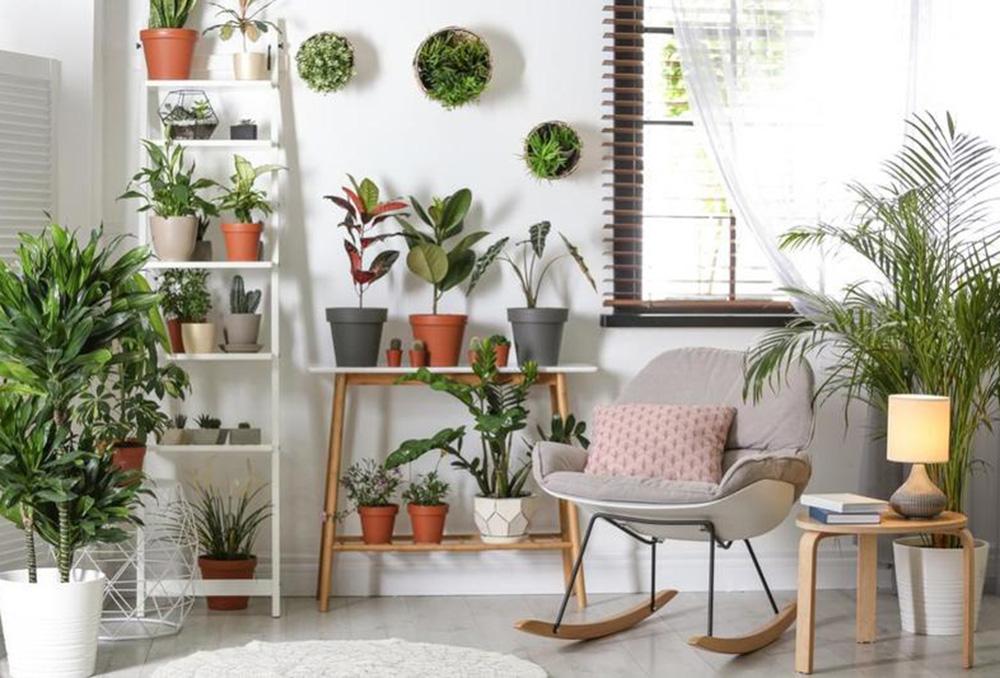 أفكار الديكور الداخلي: نباتات في ديكور الغرفة