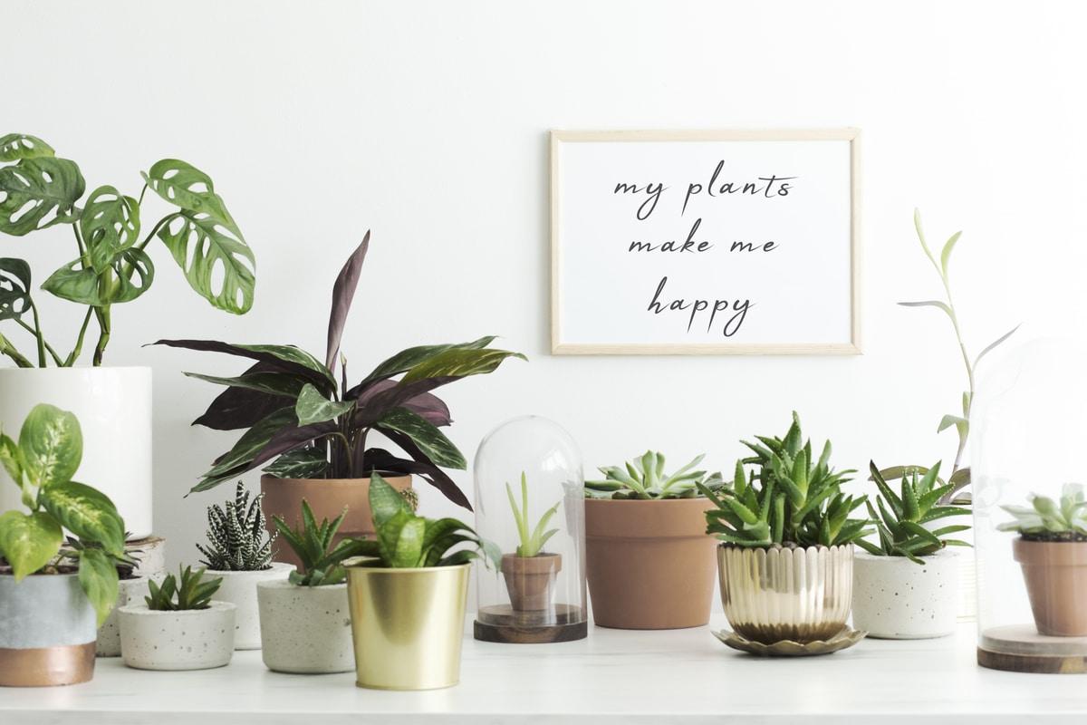 7 نصائح للتزيين قبل شراء نباتات الظل