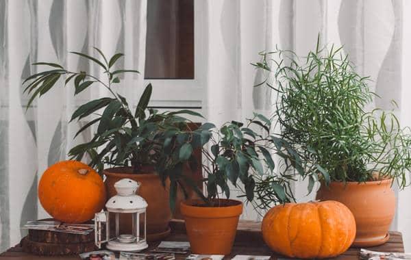 أفكار الديكور للنباتات الداخلية